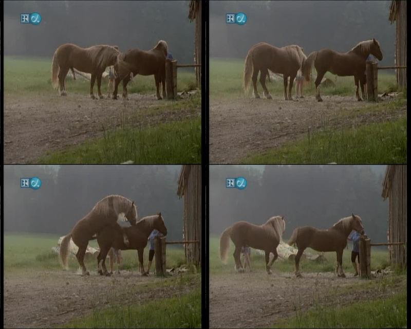 161906627 0764 ztub horse mating 1 - Horse Mating 1 - ZooSex Tube