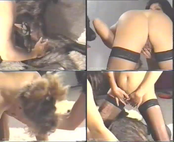 159242453 0534 hmz dutch dog in action - Dutch Dog In Action / Amateur ZooSex